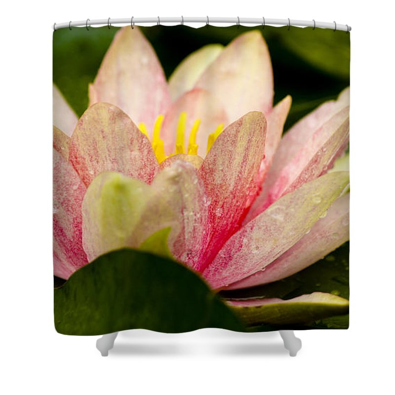 J Paul Getty Shower Curtain featuring the photograph Water Lilly At Eye Level by Teresa Mucha