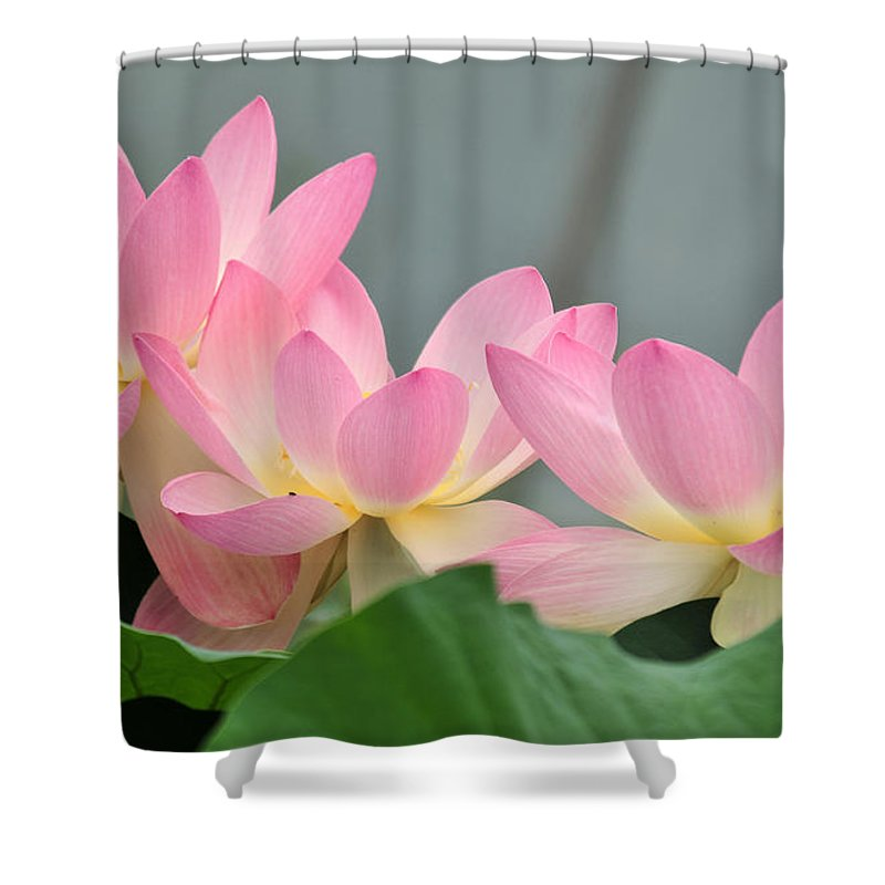 Water Shower Curtain featuring the photograph water lily 57 Pink Lotus by Terri Winkler