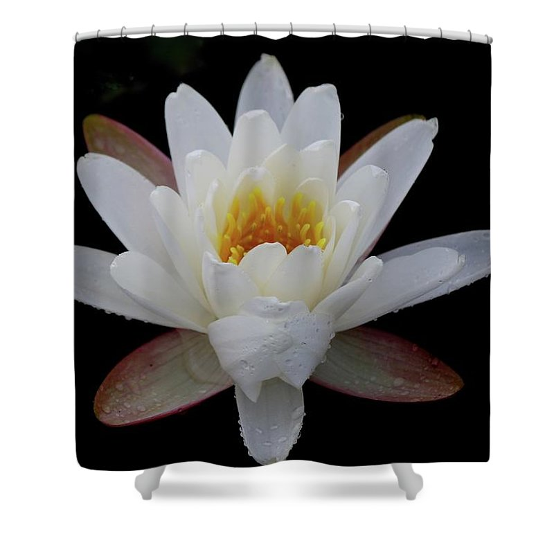 Water Lily Shower Curtain featuring the photograph Water Lily by Beverly Cummiskey