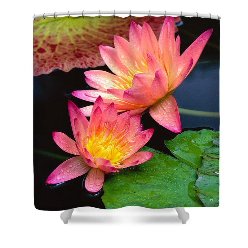 Bill Brennan Shower Curtain featuring the photograph Water Lily by Bill Brennan - Printscapes