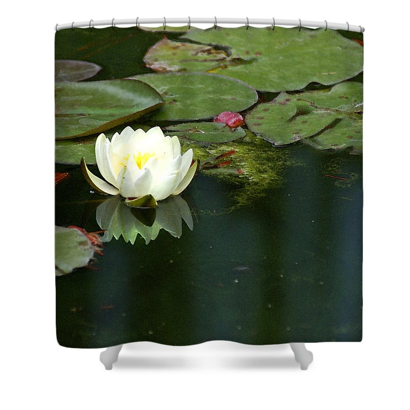 Lily Shower Curtain featuring the photograph Water Lily by Heather Coen