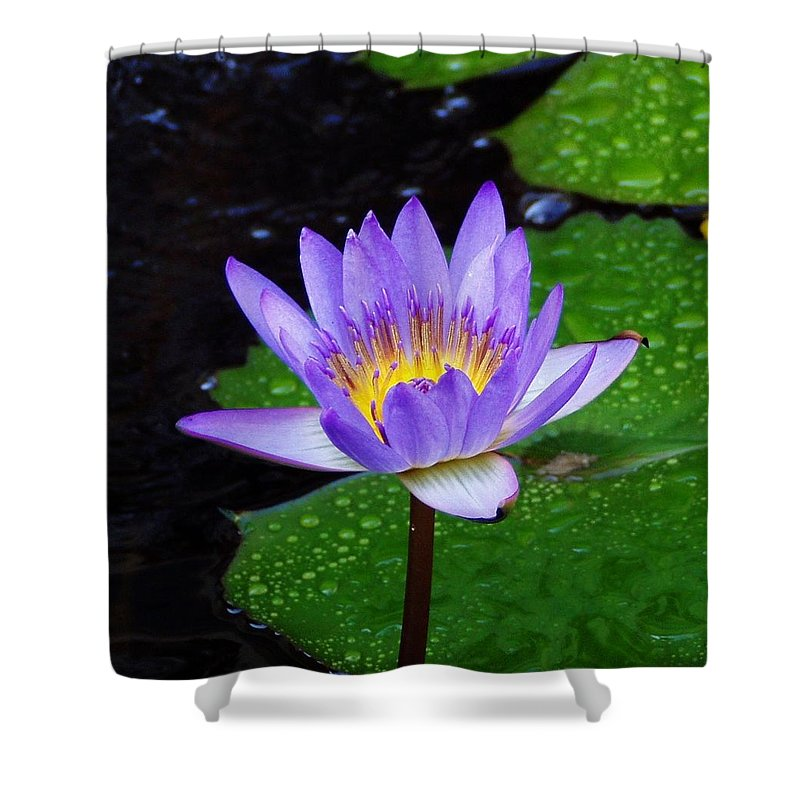Flower Shower Curtain featuring the photograph Water Lily by Patti Bean