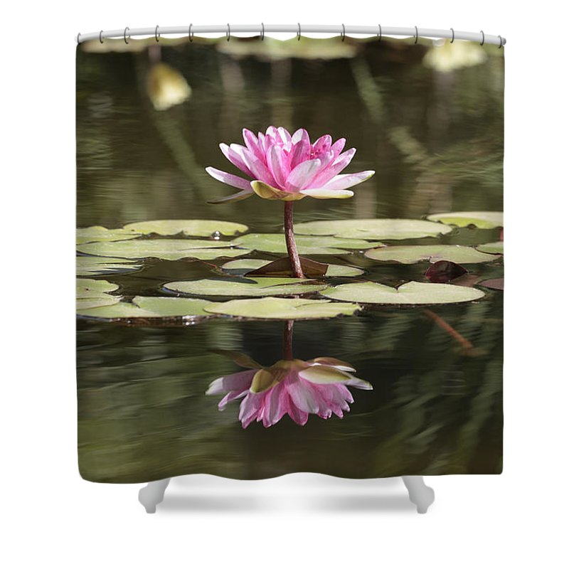 Lily Shower Curtain featuring the photograph Water Lily by Phil Crean