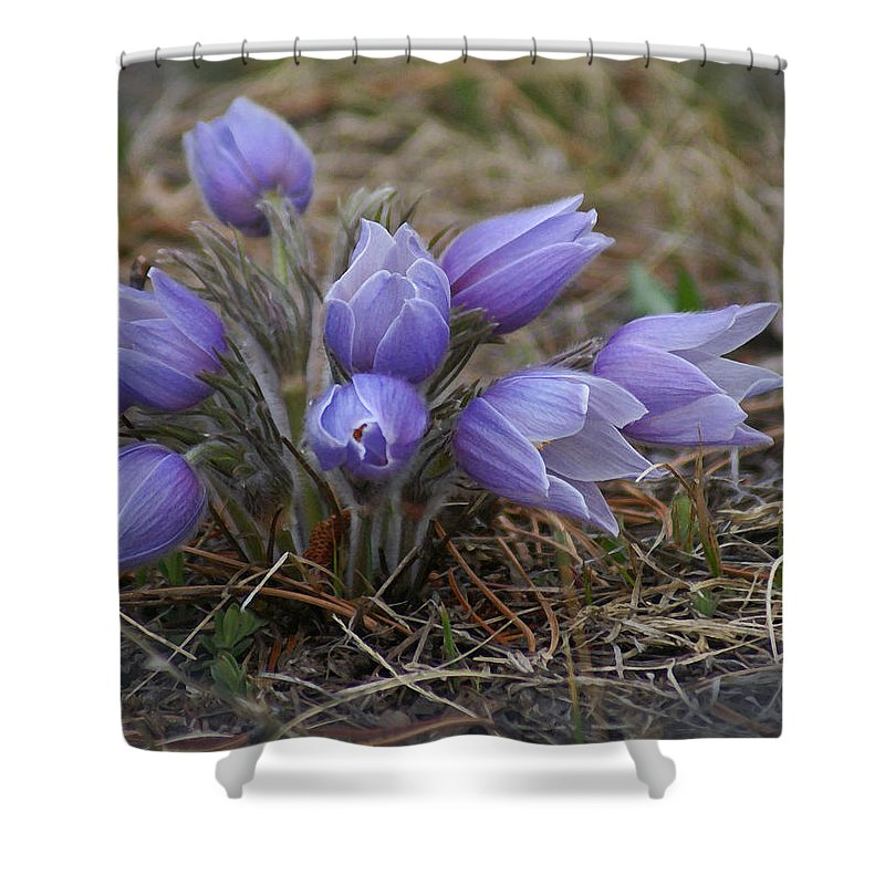Pasque Flower Shower Curtain featuring the photograph Watercolor Pasque Flowers by Heather Coen