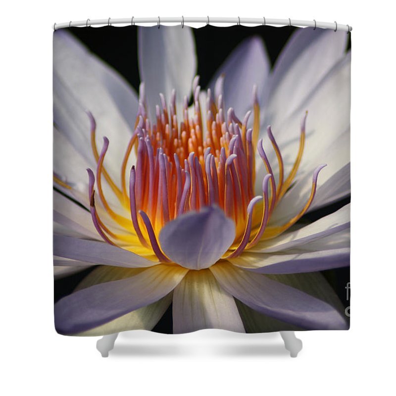 Waterlily Shower Curtain featuring the photograph Waterlily by Helen Weston