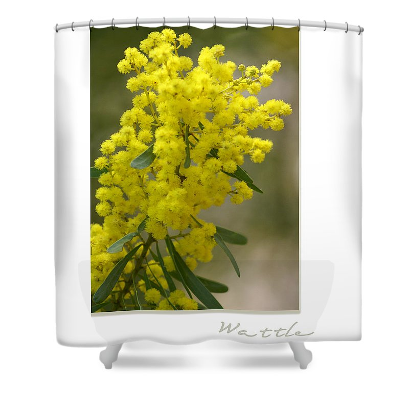 Nature Shower Curtain featuring the photograph Wattle by Holly Kempe