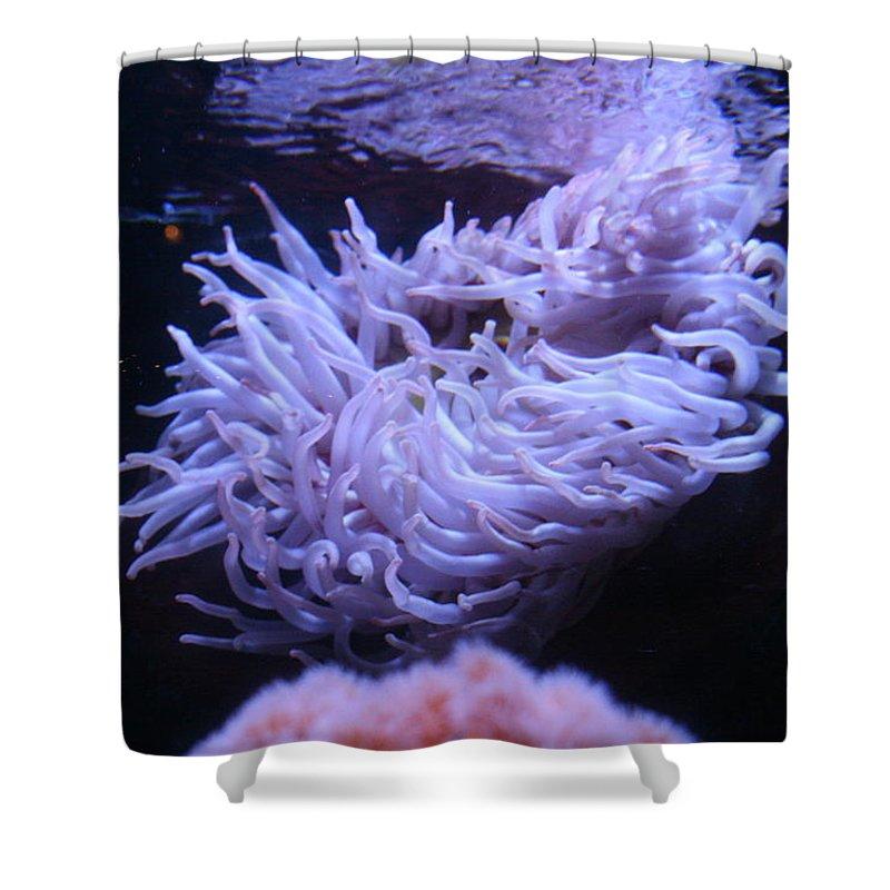 Sea Anemone Shower Curtain featuring the photograph Waving Sea Anemone - Aquarium by Lynn Michelle