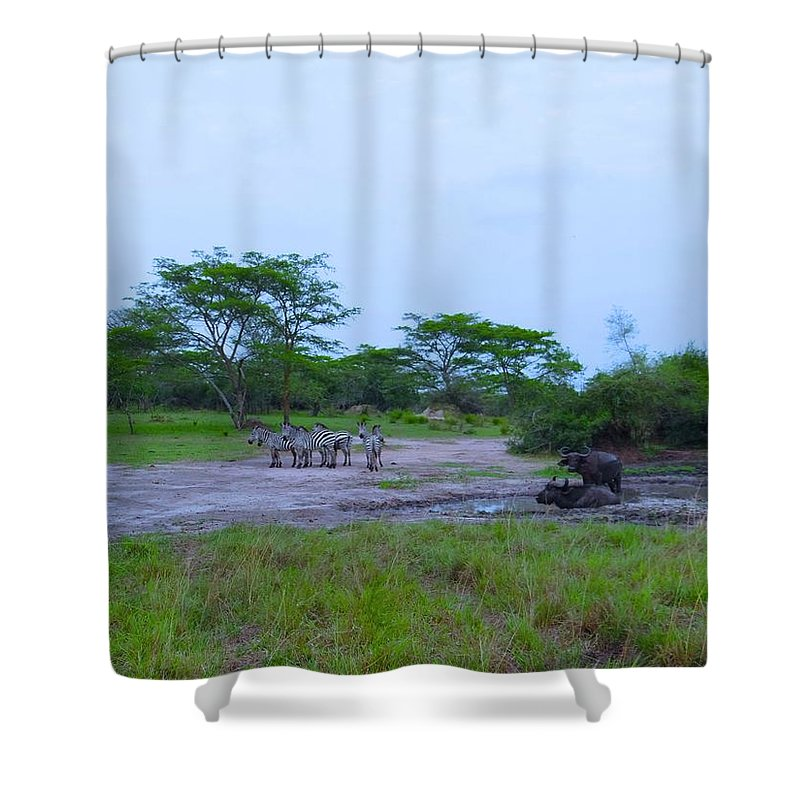 Exploramum Shower Curtains
