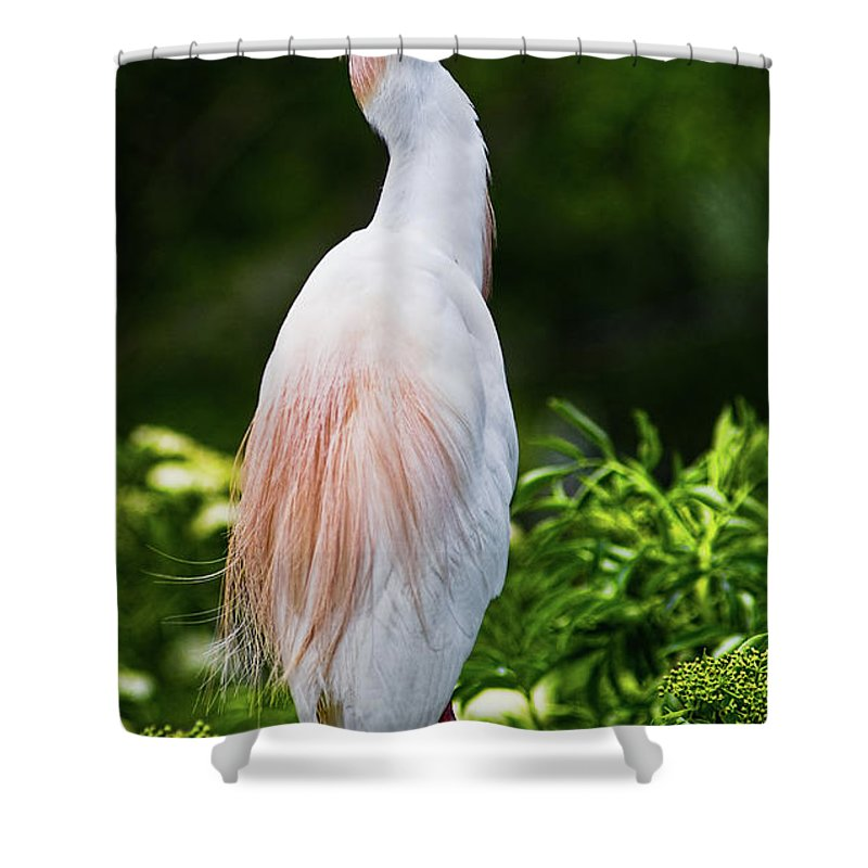 Cattle Egret Shower Curtain featuring the photograph Wearing Spring Colors by Christopher Holmes