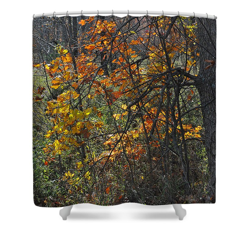 Fall Shower Curtain featuring the photograph Web Of Color by Tim Nyberg