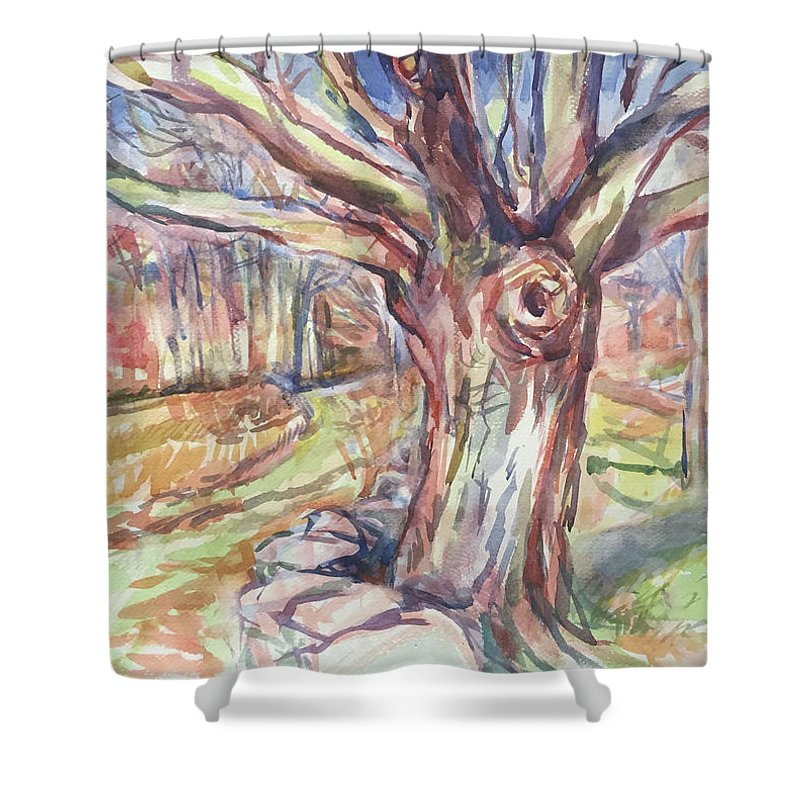 Watercolor Shower Curtain featuring the painting Weir Farm Oak Tree by Abbie Rabinowitz