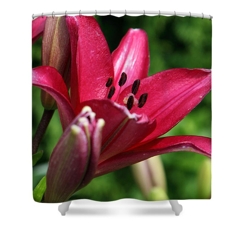Lilly Shower Curtain featuring the photograph Welcoming by Amanda Barcon