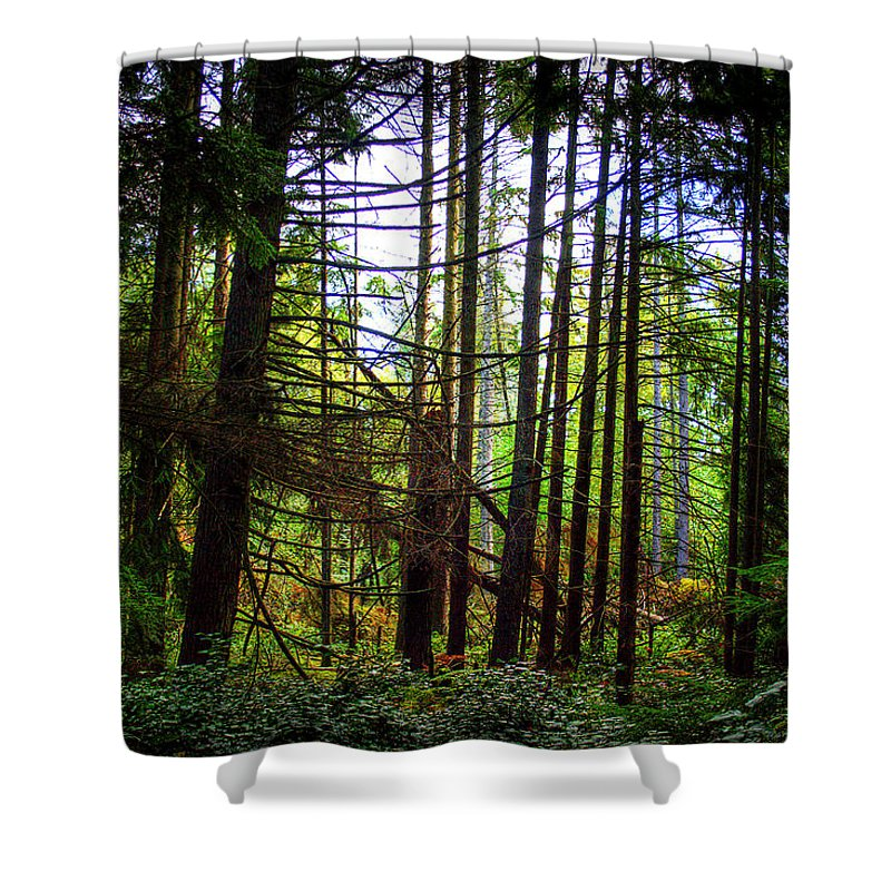 West Hylebos Wetlands Shower Curtain featuring the photograph West Hylebos Backlit by David Patterson