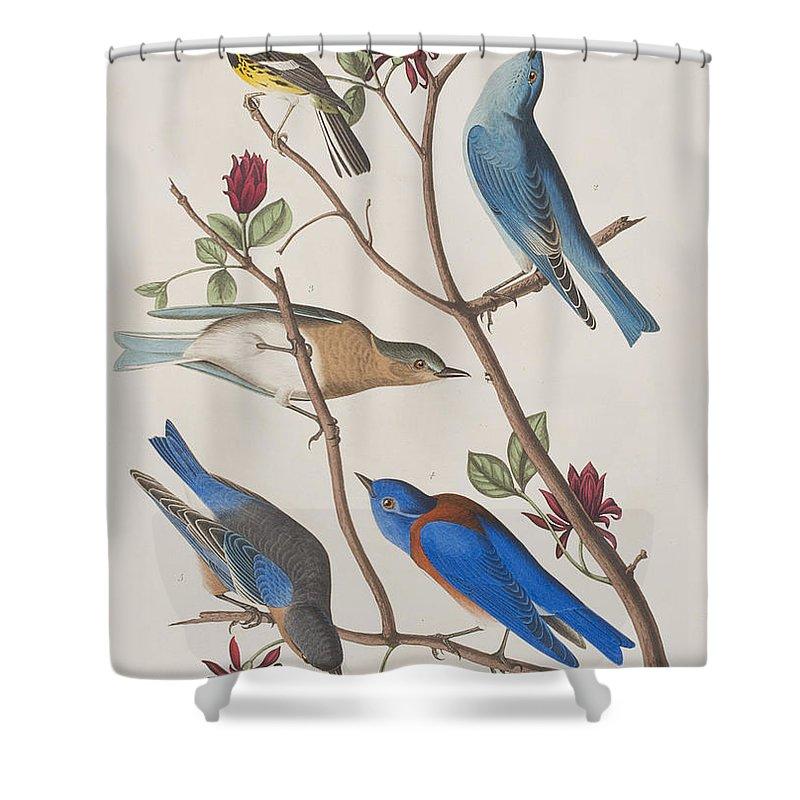 Audubon Shower Curtain Featuring The Painting Western Blue Bird By John James