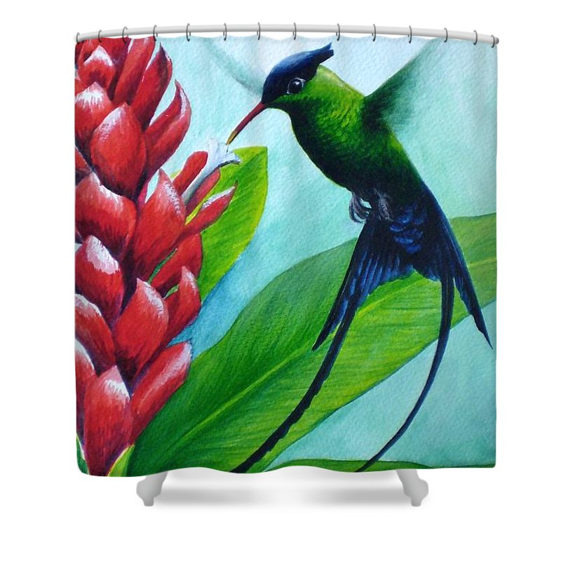 Western Streamertail Hummingbird Shower Curtain featuring the painting Western Streamertail Hummingbird by Christopher Cox