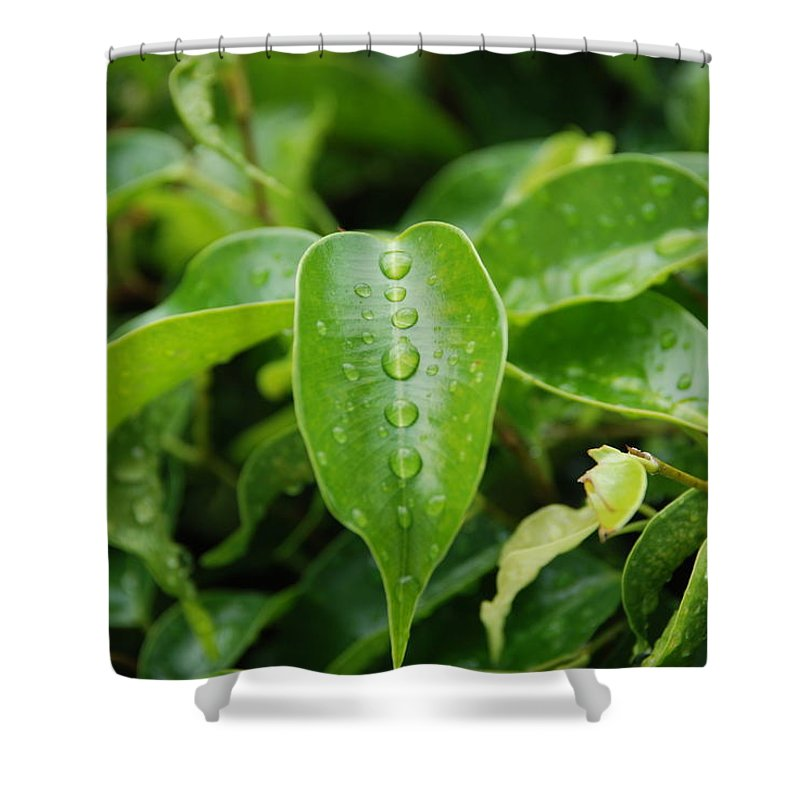 Macro Shower Curtain featuring the photograph Wet Bushes by Rob Hans
