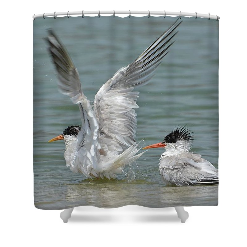 Terns Shower Curtain featuring the photograph Wet Heads by Fraida Gutovich