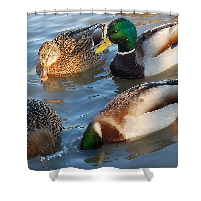 Duck Shower Curtain featuring the photograph What Are They Going On? by Yuri Hope