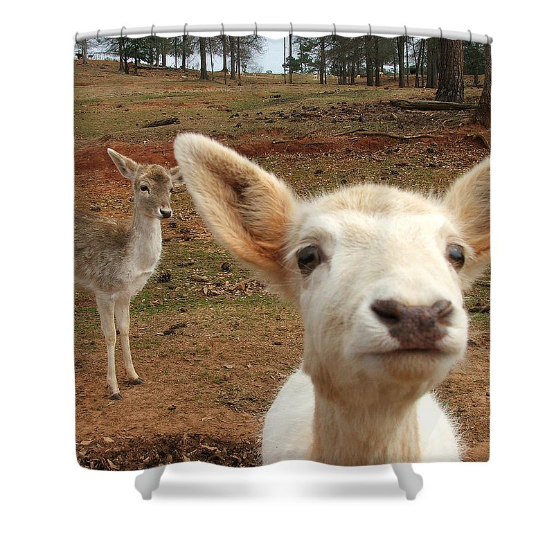 Deer Shower Curtain featuring the photograph What Is That by Robert Meanor