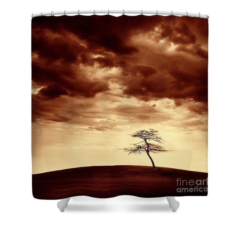 Tree Shower Curtain featuring the photograph What Will Be The Legacy by Dana DiPasquale
