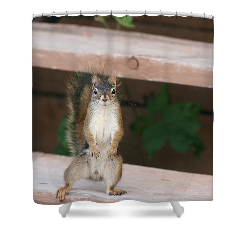 Squirrel Mother Nature Wild Animal Cute Dancing Shower Curtain featuring the photograph What You Lookin At by Andrea Lawrence