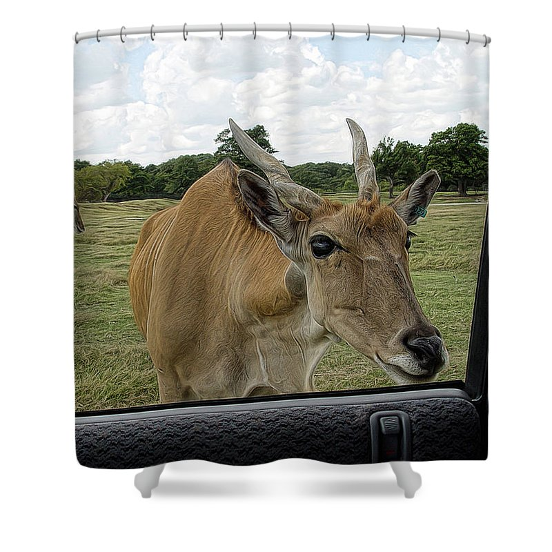 Animal Shower Curtain featuring the photograph Whatcha Got In There by Carolyn Fletcher