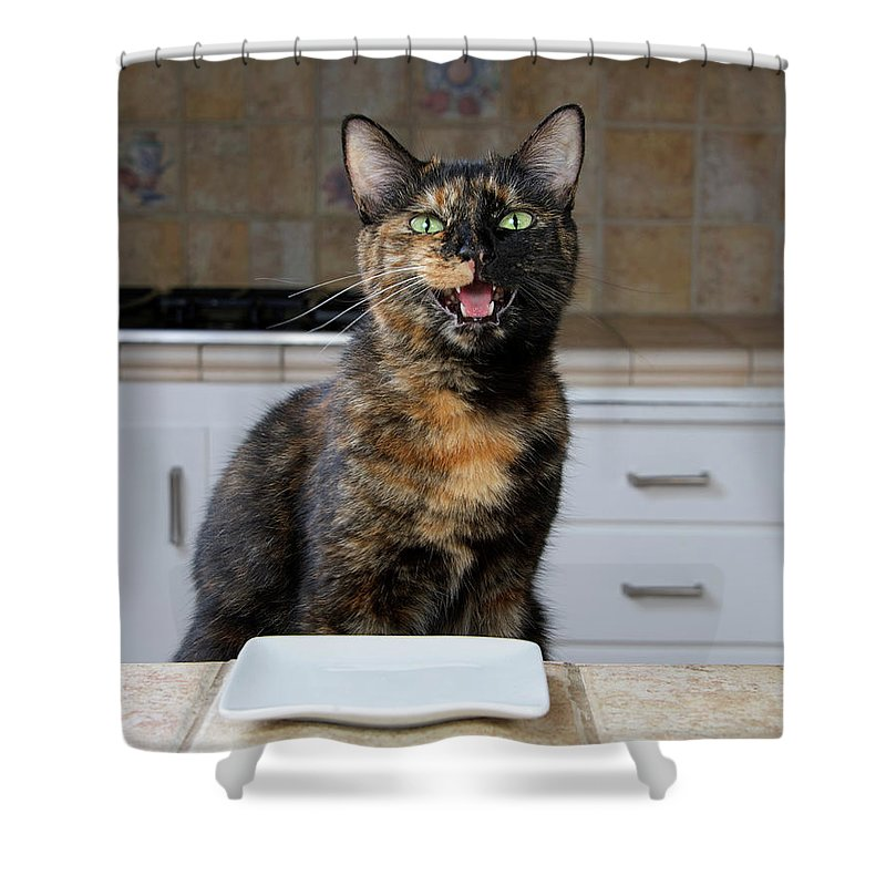 Cat Shower Curtain featuring the photograph What's For Dinner? by Sheila Fitzgerald