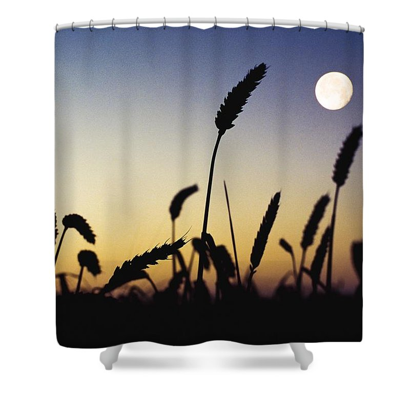 Field Shower Curtain featuring the photograph Wheat Field, Ireland Wheat Field And by The Irish Image Collection