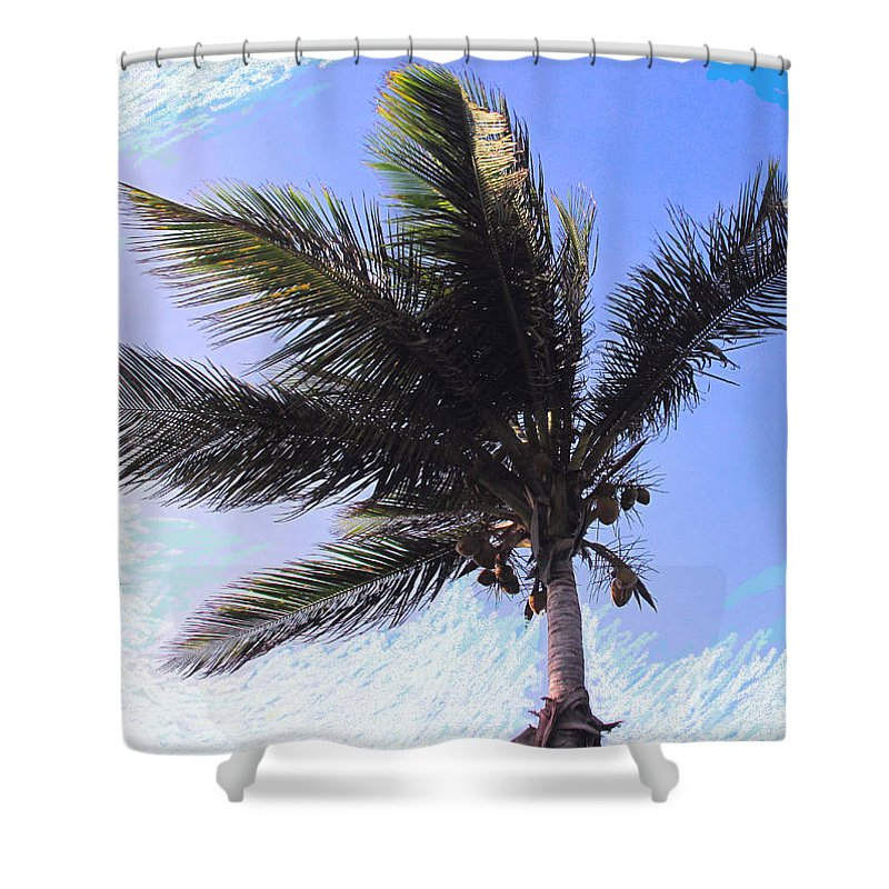 Palm Shower Curtain featuring the photograph Where Coconuts Come From by Ian MacDonald