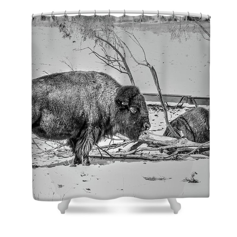 Bison Buffalo Nebraska Shower Curtain featuring the photograph Where The Buffalo Rest by J Laughlin