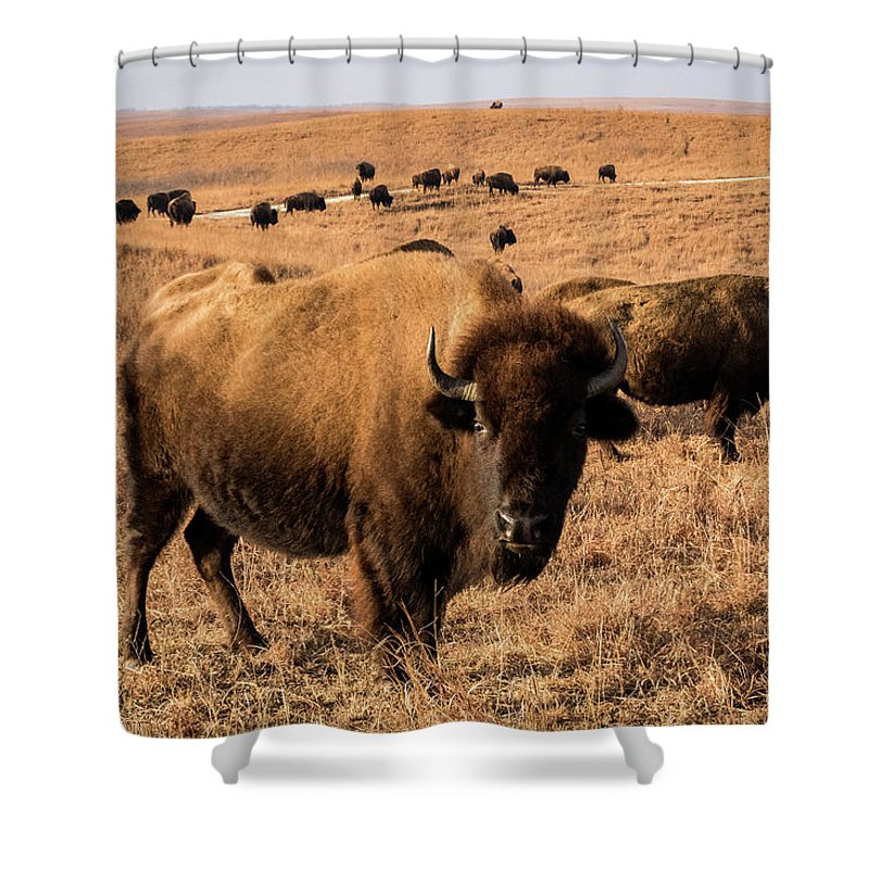 Jay Stockhaus Shower Curtain featuring the photograph Where The Buffalo Roam by Jay Stockhaus
