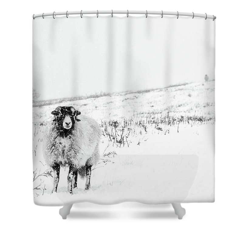 Swaledale Shower Curtain featuring the photograph Which Way Is South? by Janet Burdon