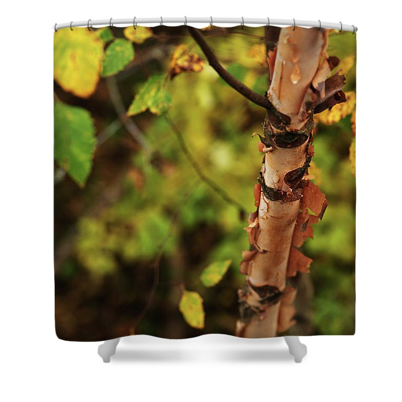 Aspen Shower Curtain featuring the photograph Whispered Thoughts by Linda Shafer
