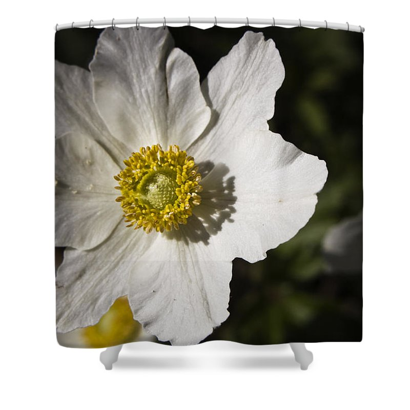 Flower Shower Curtain featuring the photograph White Anemone by Teresa Mucha