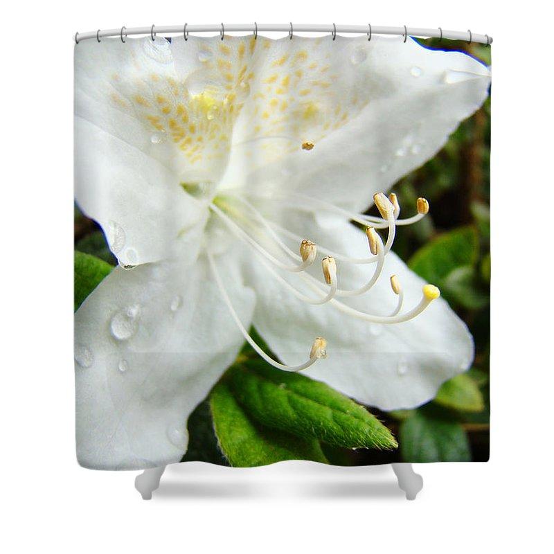 �azaleas Artwork� Shower Curtain featuring the photograph White Azalea Flower 9 Azaleas Raindrops Spring Art Prints Baslee Troutman by Baslee Troutman