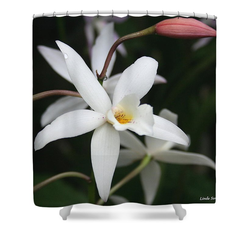 Flowers Nature White Macro Orchid Greenhouse Digital Photography Shower Curtain featuring the photograph White Beauty Dove by Linda Sannuti