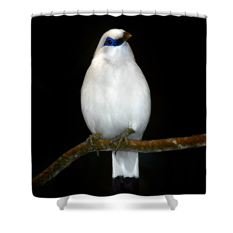 Bird Shower Curtain featuring the photograph White Bird by Anthony Jones