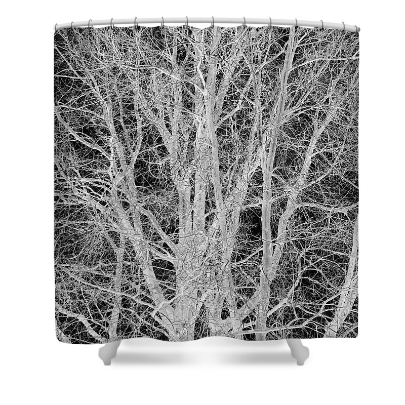 Black And White Shower Curtain featuring the digital art White Branches by Munir Alawi