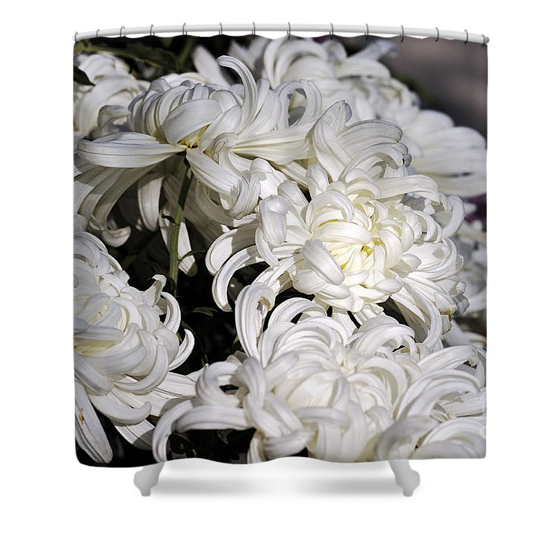 Clay Shower Curtain featuring the photograph White Chrysanthemum by Clayton Bruster