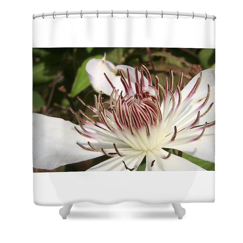 Clematis Shower Curtain featuring the photograph White Clematis Henryi by Margie Wildblood
