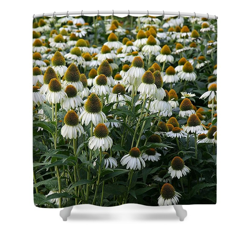 White Coneflower Shower Curtain featuring the photograph White Coneflower Field by Christiane Schulze Art And Photography