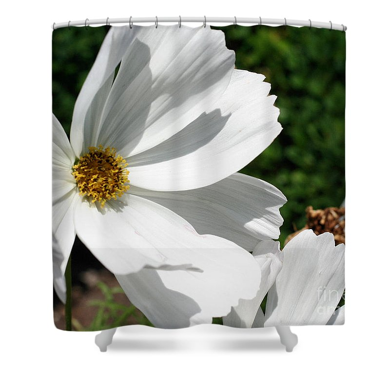Flower Shower Curtain featuring the photograph White Cosmos by Smilin Eyes Treasures