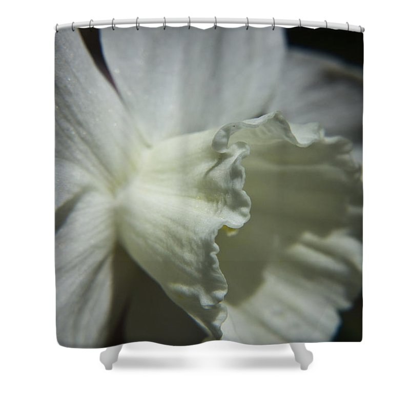 Flower Shower Curtain featuring the photograph White Daffodil by Teresa Mucha