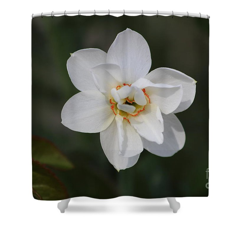 Flowers Shower Curtain featuring the pyrography White Daffodils by Simon Manuel