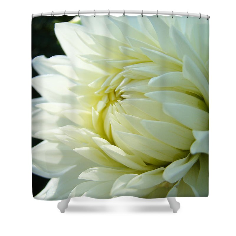 Dahlia Shower Curtain featuring the photograph White Dahlia Flower Art Print Canvas Floral Dahlias Baslee Troutman by Baslee Troutman