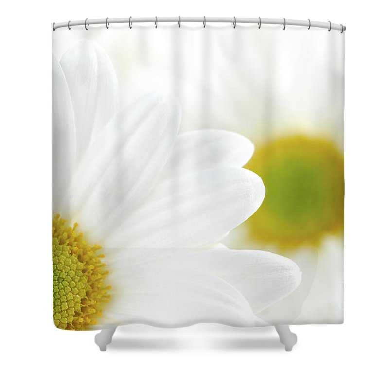 Daisy Shower Curtain featuring the photograph White Daisies by Elena Elisseeva