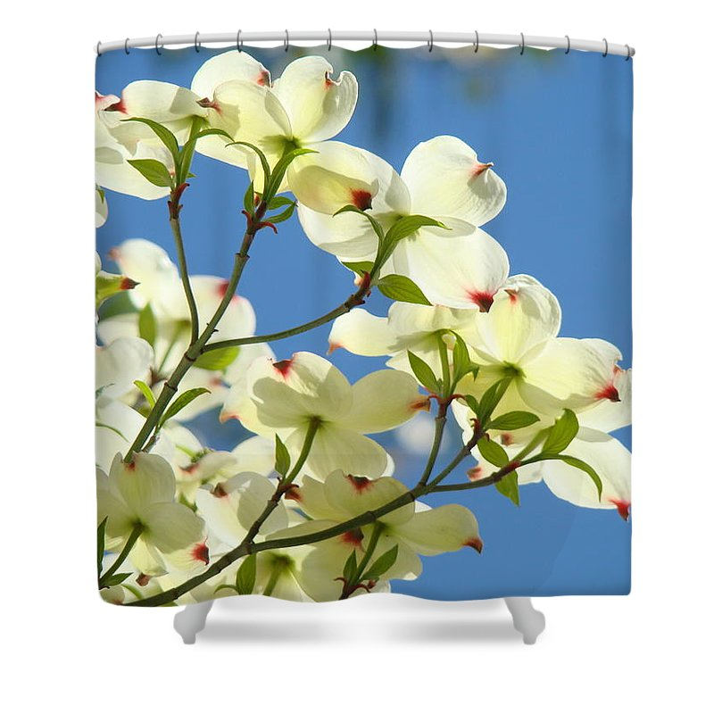 Dogwood Shower Curtain featuring the photograph White Dogwood Flowers 1 Blue Sky Landscape Artwork Dogwood Tree Art Prints Canvas Framed by Baslee Troutman