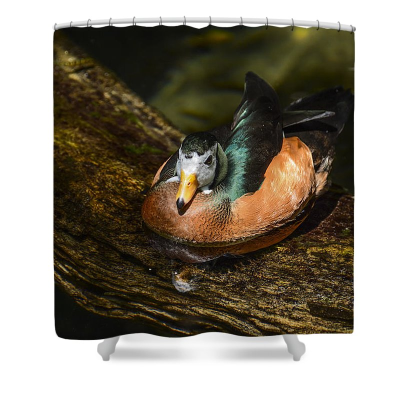 Duck Shower Curtain featuring the photograph White-faced Whistling Duck by Zina Stromberg