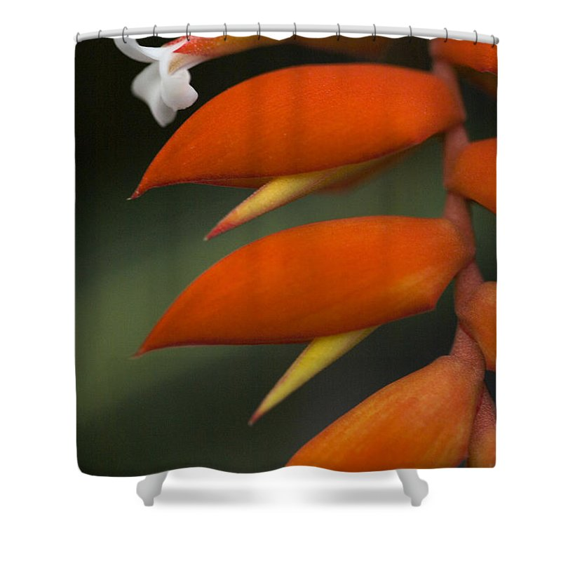 Heliconia Shower Curtain featuring the photograph White Flower And Orange by Karen Ulvestad