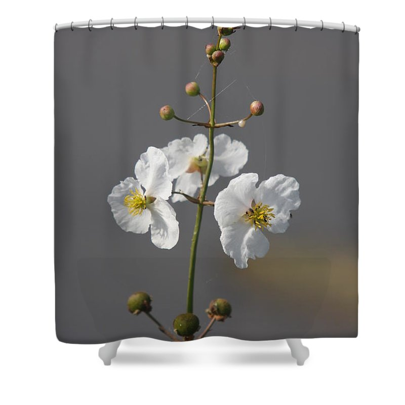 Flowers Shower Curtain featuring the photograph White Flower by Christiane Schulze Art And Photography